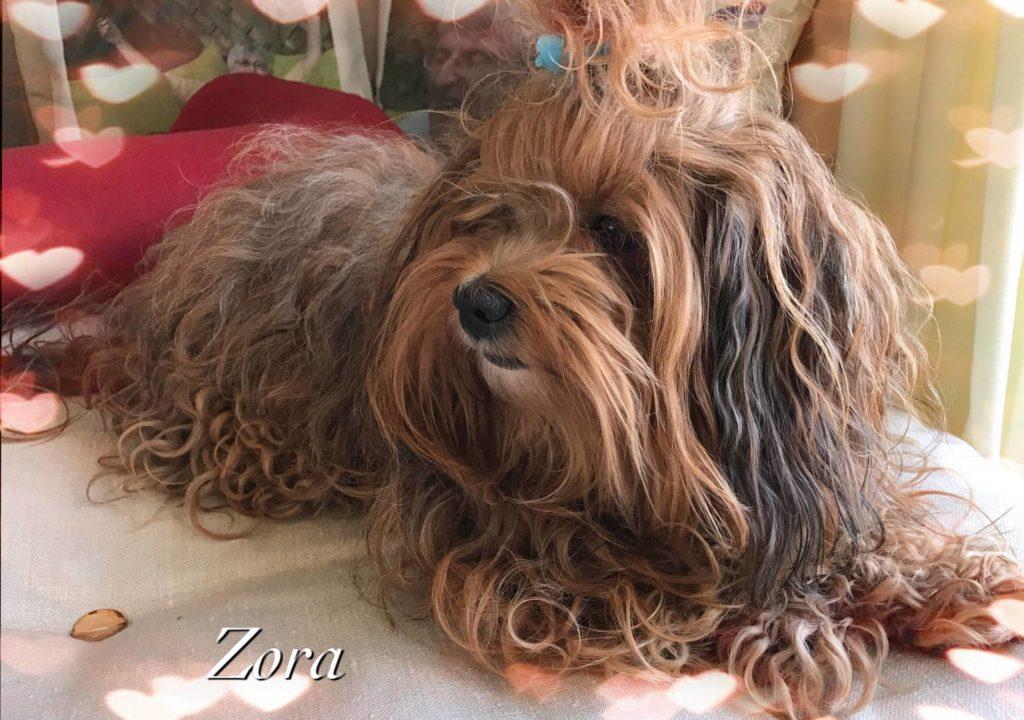 Zora-Hundemama-wieder ganz fit