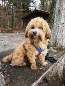 Oscar auf Spaziergang