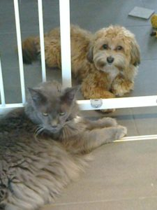 Oscar und seine Katze